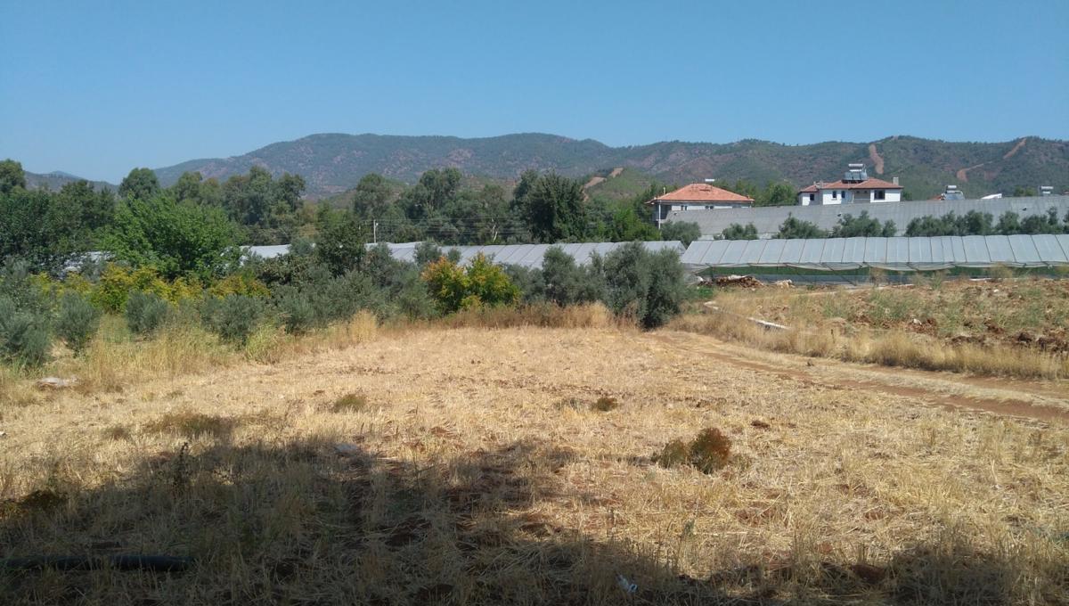 arsa-arazi-zeytinlik-esenkoy (2)