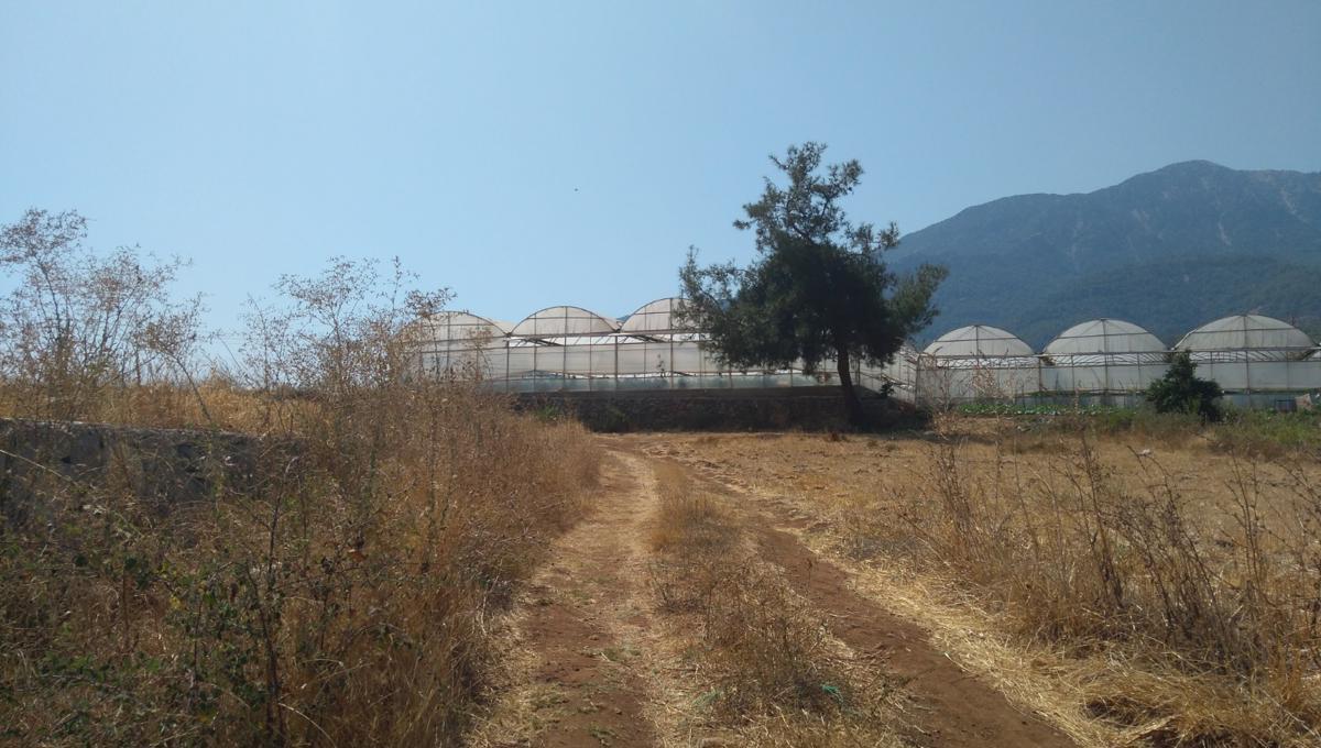 arsa-arazi-zeytinlik-esenkoy (4)