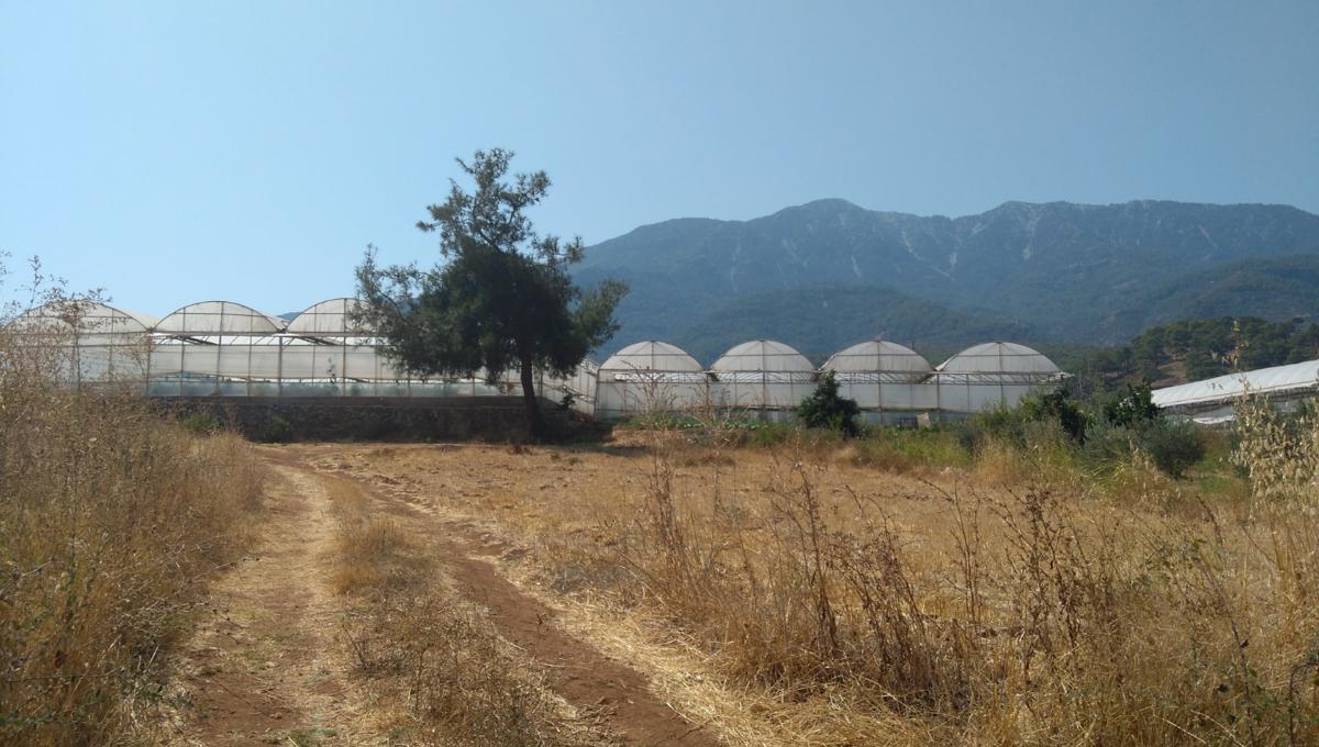 arsa-arazi-zeytinlik-esenkoy (5)