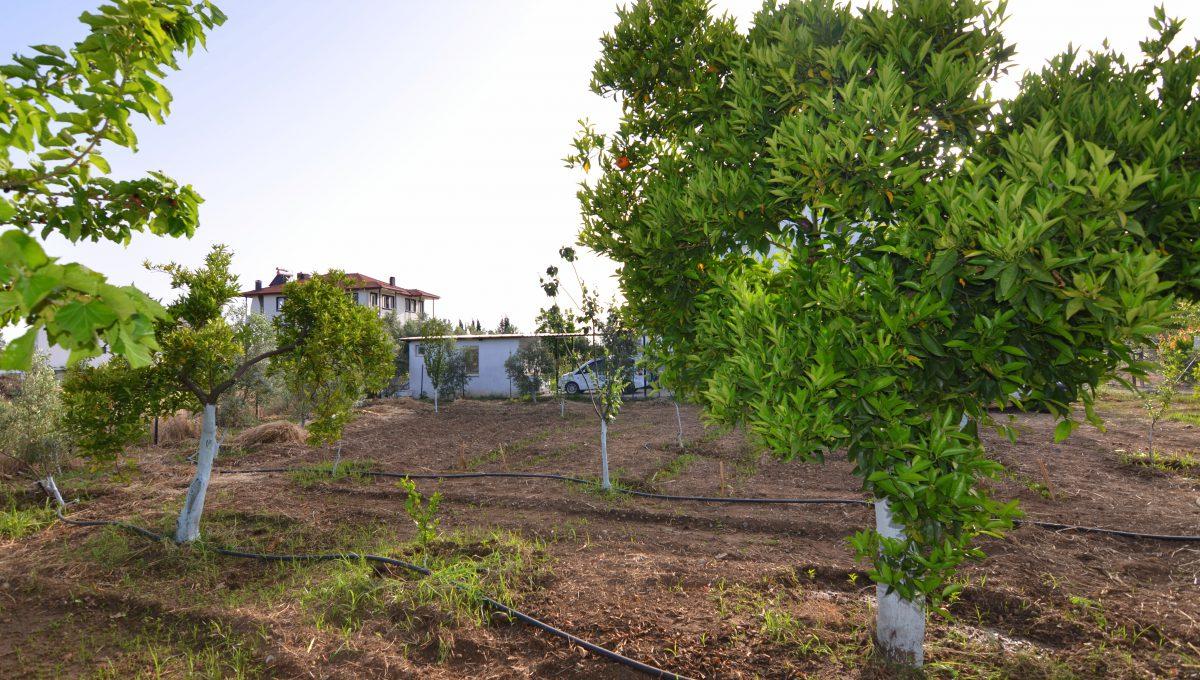 yanıklarda satılık arazi (11)