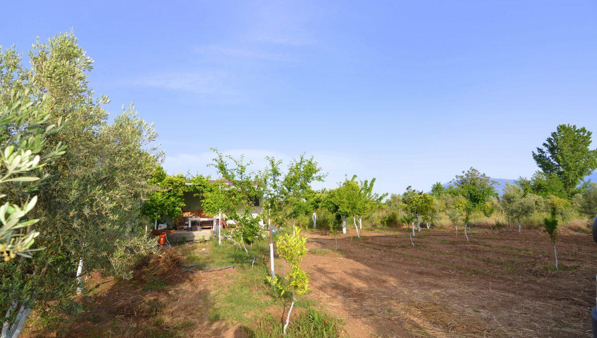 yanıklarda satılık arazi (2)