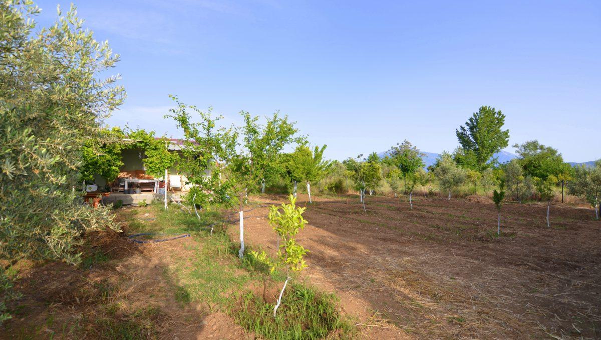 yanıklarda satılık arazi (4)